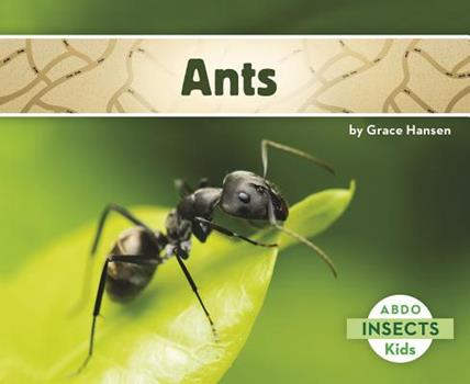 Ants - Book  of the Insects