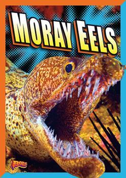 Paperback Moray Eels Book