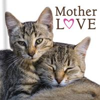 Mother Love (Cats) 1640307141 Book Cover