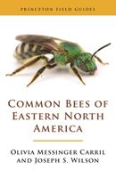 Common Bees of Eastern North America