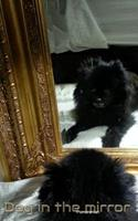 Dog in the Mirror Pomeranian 0464084806 Book Cover