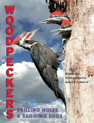 Woodpeckers Drilling Holes And Bagging Book By Sneed B Collard