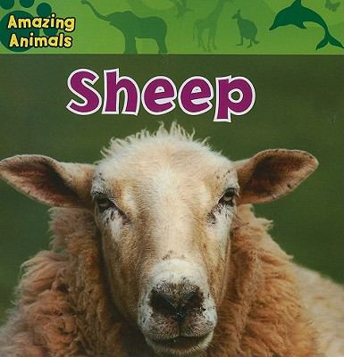 Sheep Usa