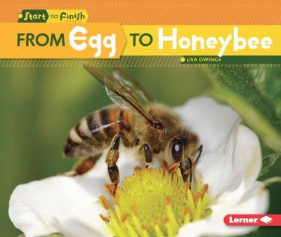 From Egg to Honeybee - Book  of the Start to Finish, Second Series