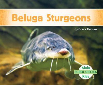 Esturiones Beluga / Beluga Sturgeons - Book  of the Super Species