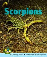Scorpions (Early Bird Nature Books) 082253004X Book Cover