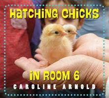 Hatching Chicks in Room 6 1580897355 Book Cover