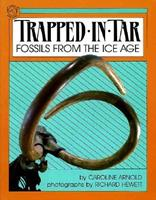 Trapped in Tar: Fossils from the Ice Age (A Junior Library Guild Selection) 0395547830 Book Cover