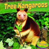 Up a Tree: Tree Kangaroos 1448861896 Book Cover