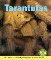 Tarantulas (Early Bird Nature Books) 0822530244 Book Cover